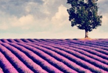 LOVELY LAVENDER / by lizette wasserman