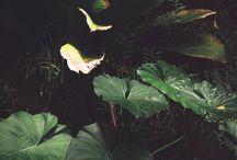 Planty plants / by Manu Indekeu