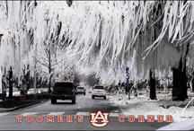 Auburn / by Kimber Camp