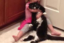 Crazy Kitties! / Meow / by Ashton Kroeker