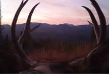 Northwest wildlife / by Conservation Northwest