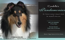 American Collie Breed / by Debbie Pimentel