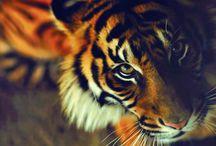 _Beautiful Savages_ / by Lezaan Brink