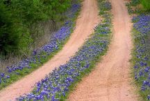 country lanes / by Vicki Defoore