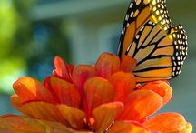 Photos/Butterfly & More / by Carol Gray