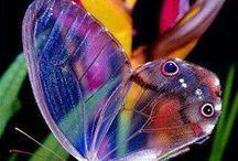 Butterflies / by Mary Allen