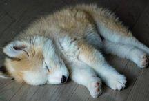 Dogs :) / by Amanda Robinson