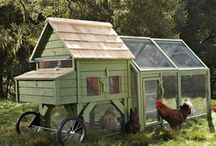Chickens, Organic Gardening & Sustainable Living / by Ann Traynor-Plowman