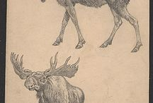 For the love of MOOSE! / Can't get enough of this magnificent creature in all it's might, grace and ferocity to protect what is important.  / by Janea DeLuz