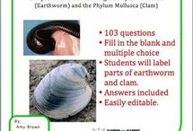 Invertebrates / by Science Stuff