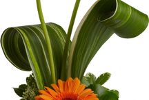 European Design Inspiration / Modern and unique floral designs that inspire us! / by Owens Flower Shop