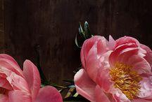 flowers / by Jodi Vander Woude