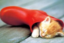 My little orange cream :) / by Cheryl Thallman