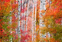 Four Seasons of Utah / Check out what's in store in each of Utah's four distinct seasons!  / by Utah Athletics