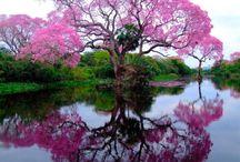 Trees / by Vicki Kimsey-Singer