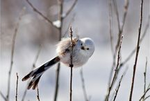 ✿⊱ Birds ✿⊱╮ / by Flan'Elle Et Prune