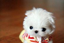 Oh, the cuteness! / by Kimba Wawrzyniak