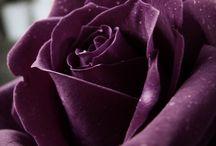 The color purple. / by Marita Sankes