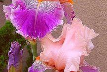 Flower power / by Misty Fealy