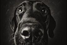 big noses / by Karen Rosnick