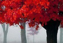 Autumn / by Christine Garity