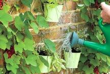 The Garden / Ideas for if I ever have a garden / by Melissa Conklin