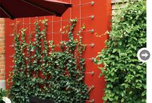 Cable Trellis = Garden Magic / by Stainless Cable & Railing