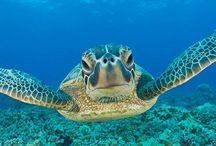 Hawaiian Honeymoon Take 2 / by Meghan Colleen