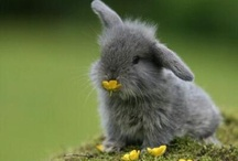 Cute Animals / by Denise Thornton
