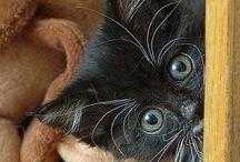 cuties / All creatures cute! / by Anna Hurd