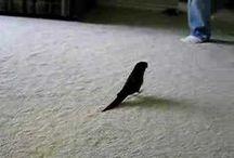 Birds / by Jean Franks