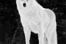 Wolves / by Andrea Williams