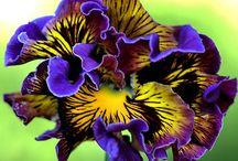 flowers / by Suz Chamberlain