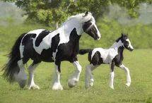 HORSE OF COURSE / by Gena Neitzel
