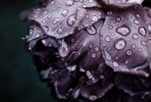 Purple Love / by Christina Bonner