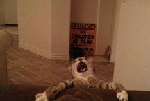 Damn Funny! / by Christy Lynn