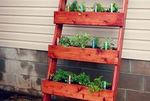 Herbs Galore! / by Jessica L'Heureux