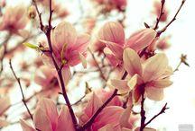 Spring / by Meta B