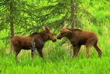 My Alaska / by Carmell Barlow