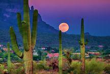 Arizona / by Kay Crandall