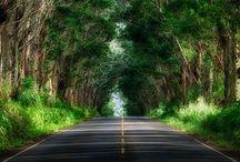 Hawaii / by Mandy Messina