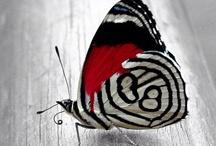 Classic Black & White / by Debbie Hagan-Hogan