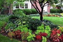 Garden / by Lynnette Schuetz