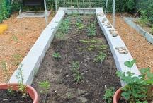 garden ideas / by Christy Rankin