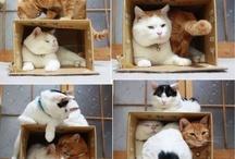 Cats / by Nadine Hancock