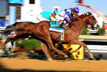 137th Preakness Stakes / by Preakness Stakes