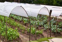 Gardening / by Diane Lienemann Craig