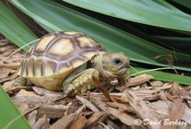 Heat the Tortoise / by Patricia Mata