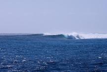 surf / by Kelly Peeler