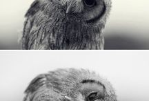 Cute Little Animals / by Katie Carder